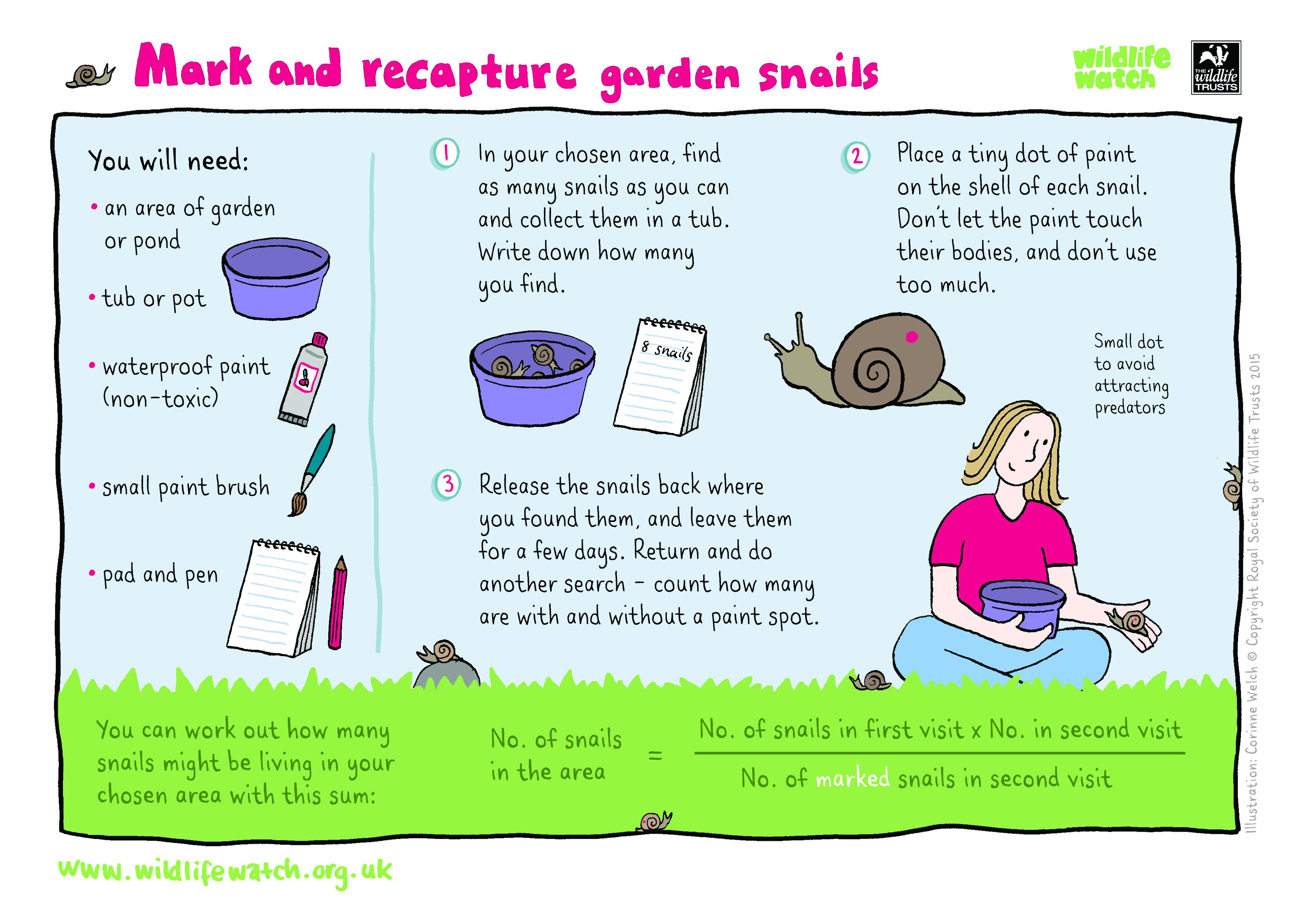 Pond Ecosystem Worksheets