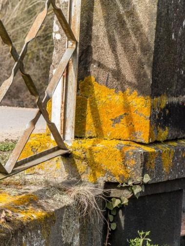 bridge lichen