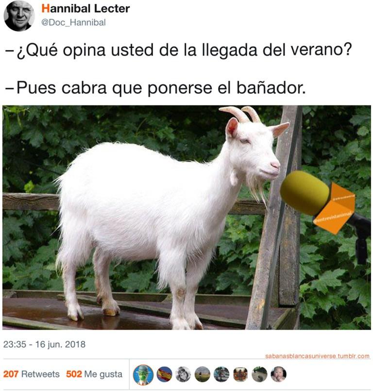Cabra de verano