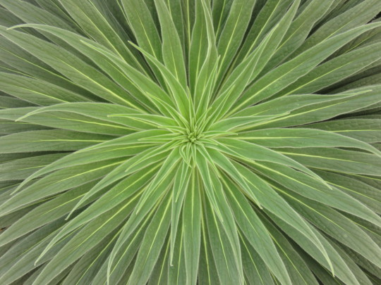 Centre of a green plant at Kew Gardens