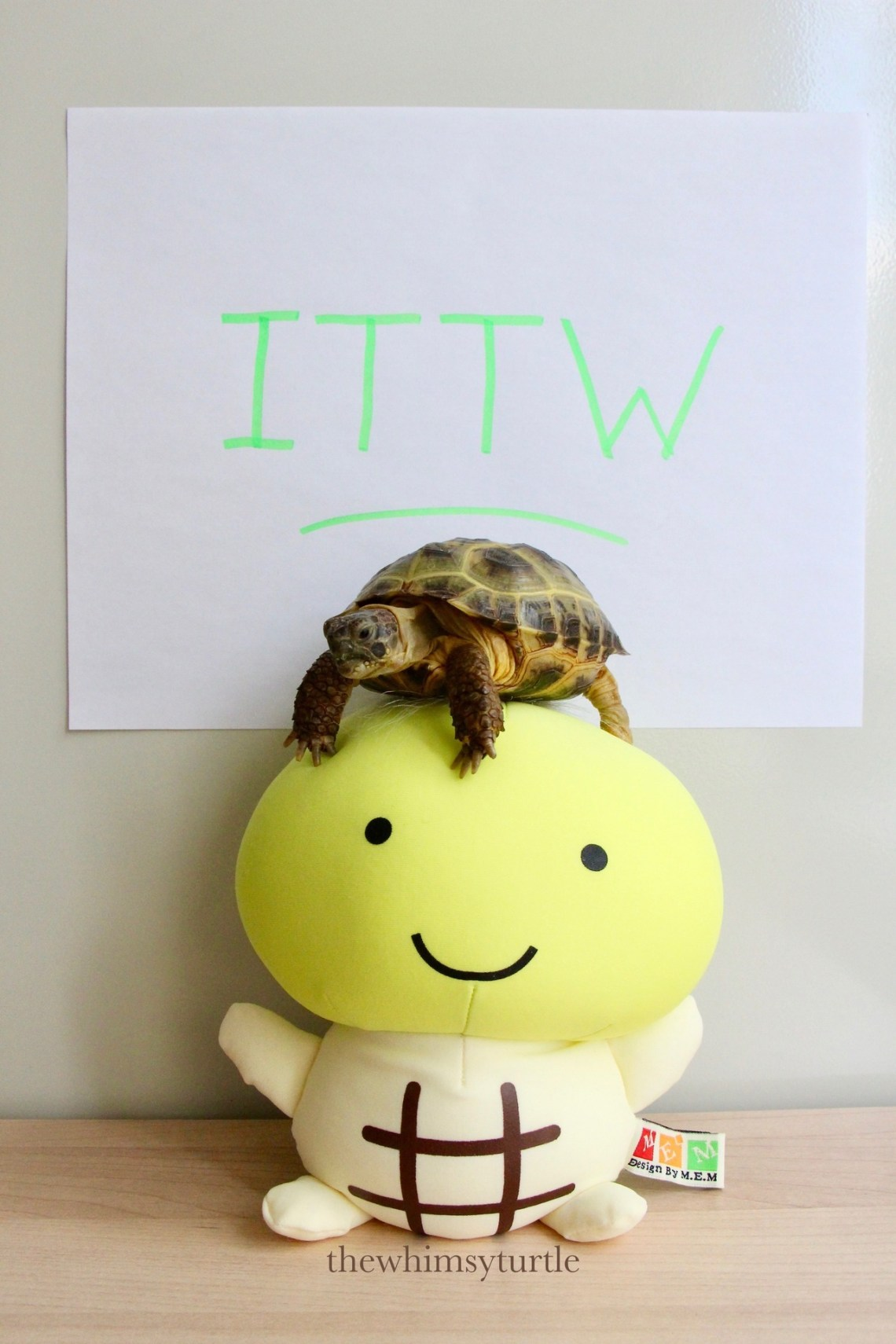 It's the one and only International Turtle and Tortoise Week!
