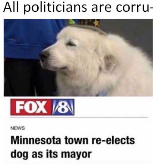 Perro alcalde