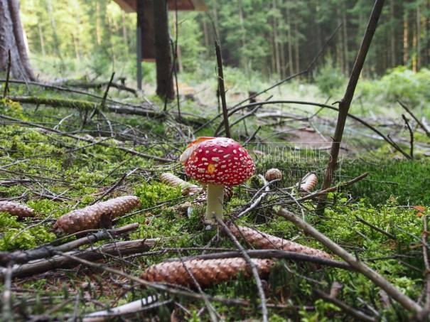 825e75d4a61d7 the perfect little mushroom – Ecology