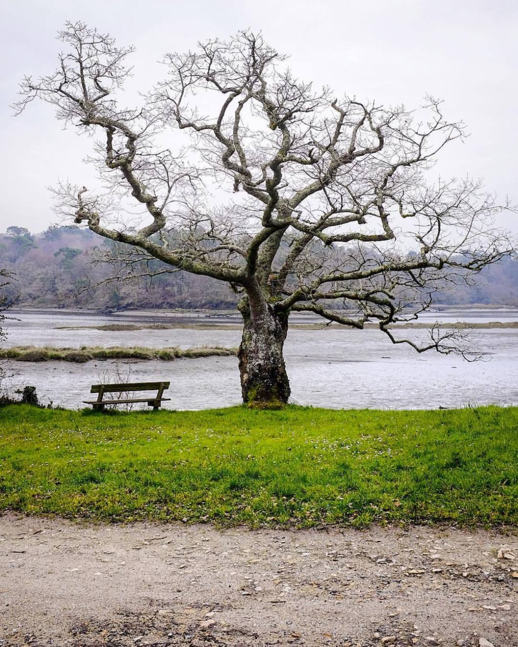 Old Tree, Bretagne 2018..#photooftheday #onephotoaday #photography #fujix100t #nature #naturephotography #landscape #landscapephotography #france #bretagne #britanny #redene #tree #baum #forest #wald #bench #park #ocean #atlantic #sea #lonesome #romantic (hier: Quimperlé)
