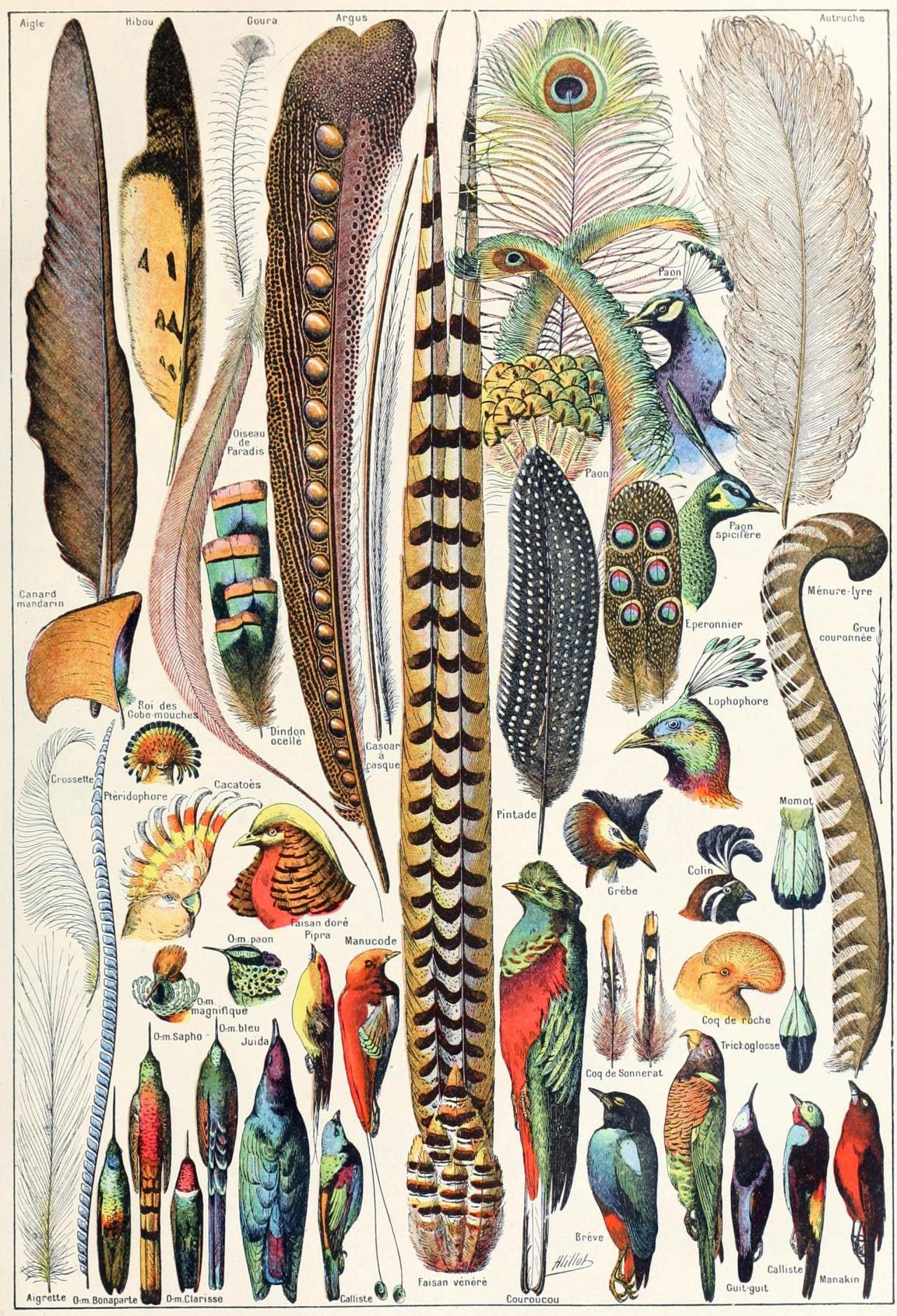 Feathers Found Only On Birds Feathers Are Some Of