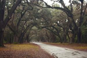 southern gothic | Tumblr