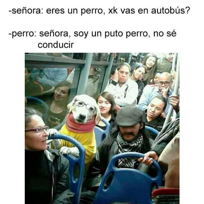 Perro en el autobús