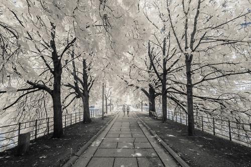 tumblr_p5xuhlznbR1qz6f9yo8_500 Paris Infrared, Pierre-Louis Ferrer Random