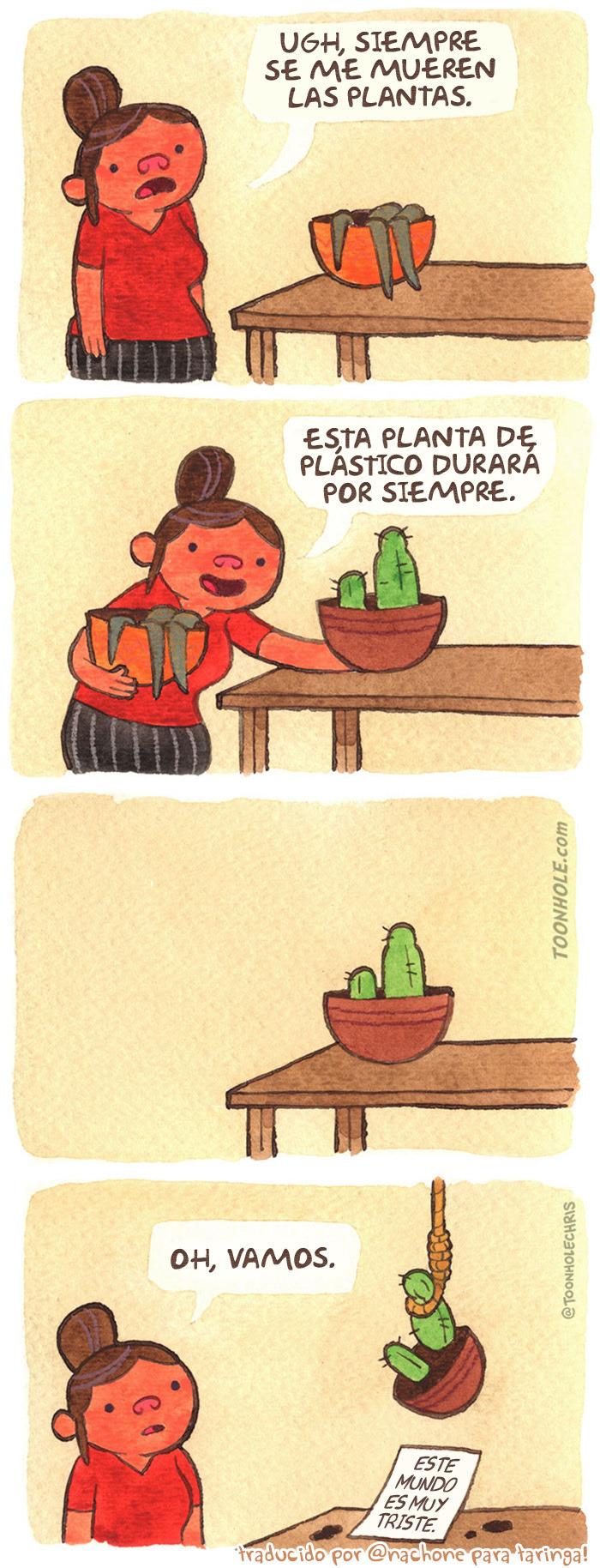 Un cactus sensible