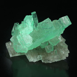 bijoux-et-mineraux:  Halite with green inclusions of Herbertsmithite on colorless Halite - Lubin Mine, Lubin District, Lower Silesia, Poland