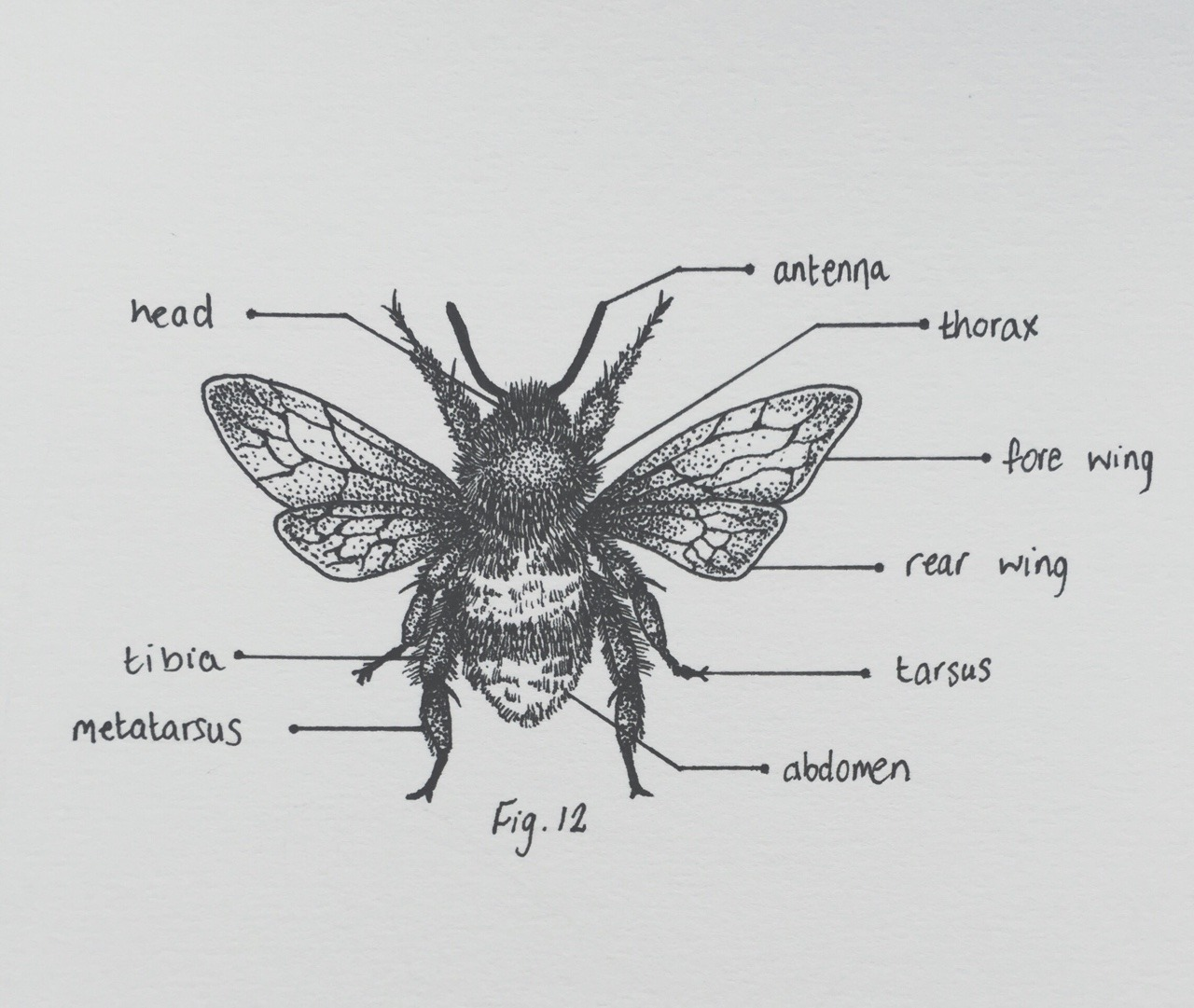 The Cryptic Chemist Bumblebee Diagram Print Is