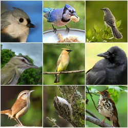 In all these bird species, the sexes look alike to us. But through a bird's eyes there are distinct differences. New blog post at the redesigned Cool Green Science: Your Field Guide is Wrong: A Bird's Eye View of the World