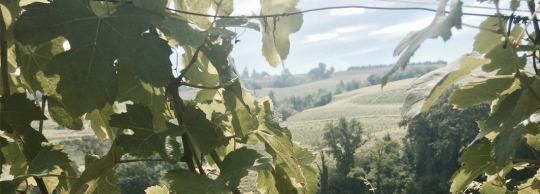 Ferdinando Principiano Winery