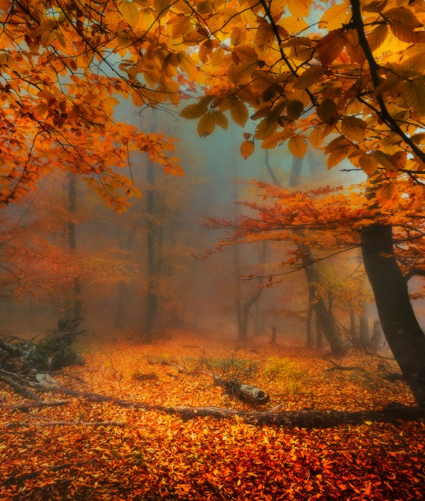 Optically aroused in the autumn wilderness by victor swan ufo optically aroused in the autumn wilderness by victor swan sciox Image collections