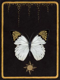 mydruidlife:  Sun and moon tarot cards