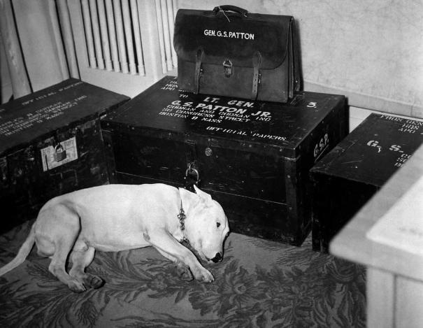 General Patton's dog just after his death, 1945 via reddit … – History
