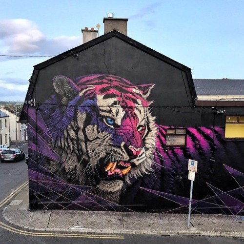 SONNY Street Artist Sonny is a British-born artist, living in South Africa. He paints gorgeous street art murals to raise awareness for endangered animals. For more check out his website and Instagram. Enjoy past street art features and follow us on...