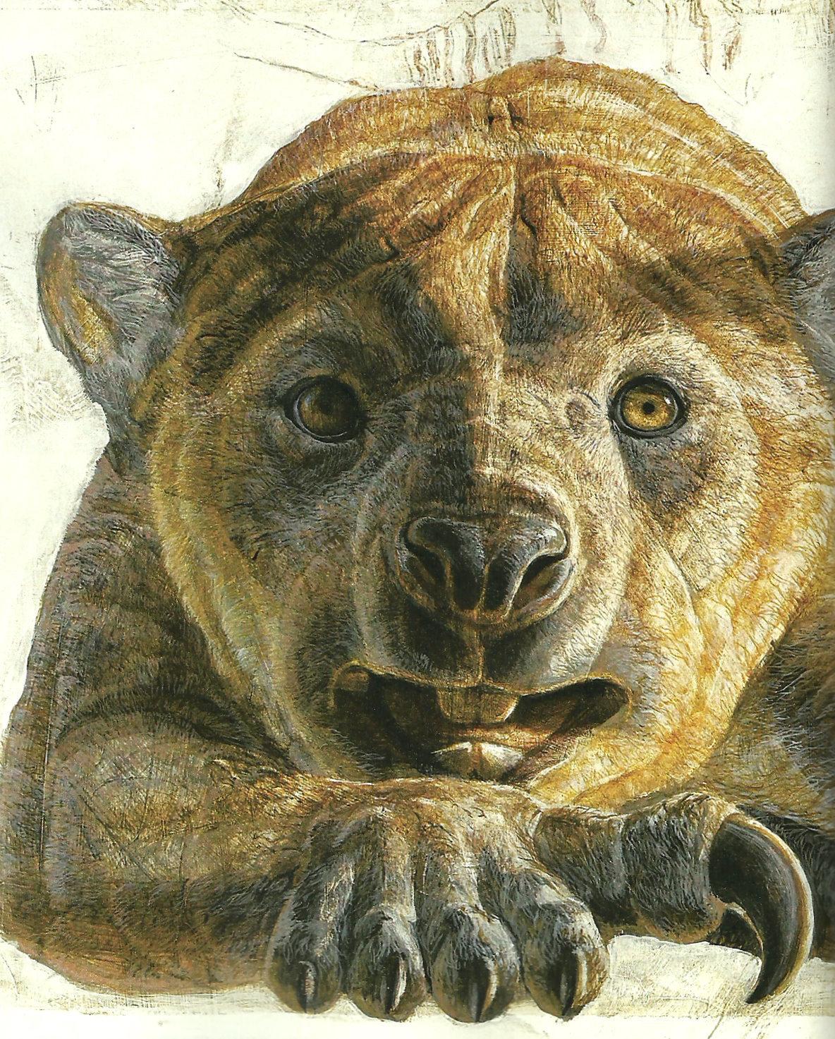 Marsupial Lion Stalks Tweed Not Everyone Is