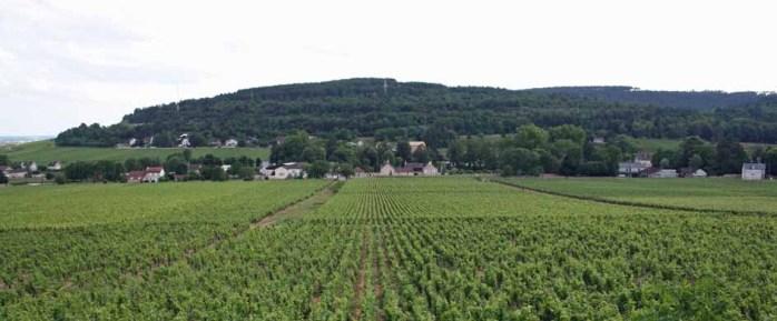 Chenu vineyard