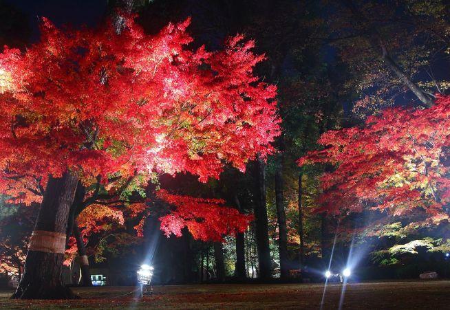 1200px-Otaguro_garden_in_autumn_2014_ⅴ