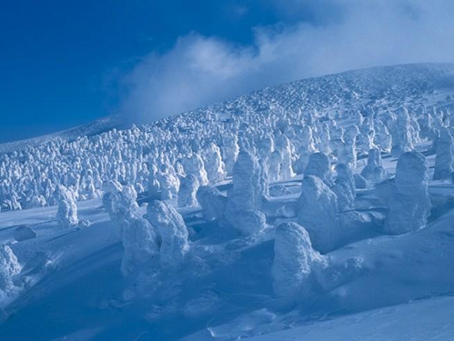 http://zaoropeway.co.jp/zao/winter/