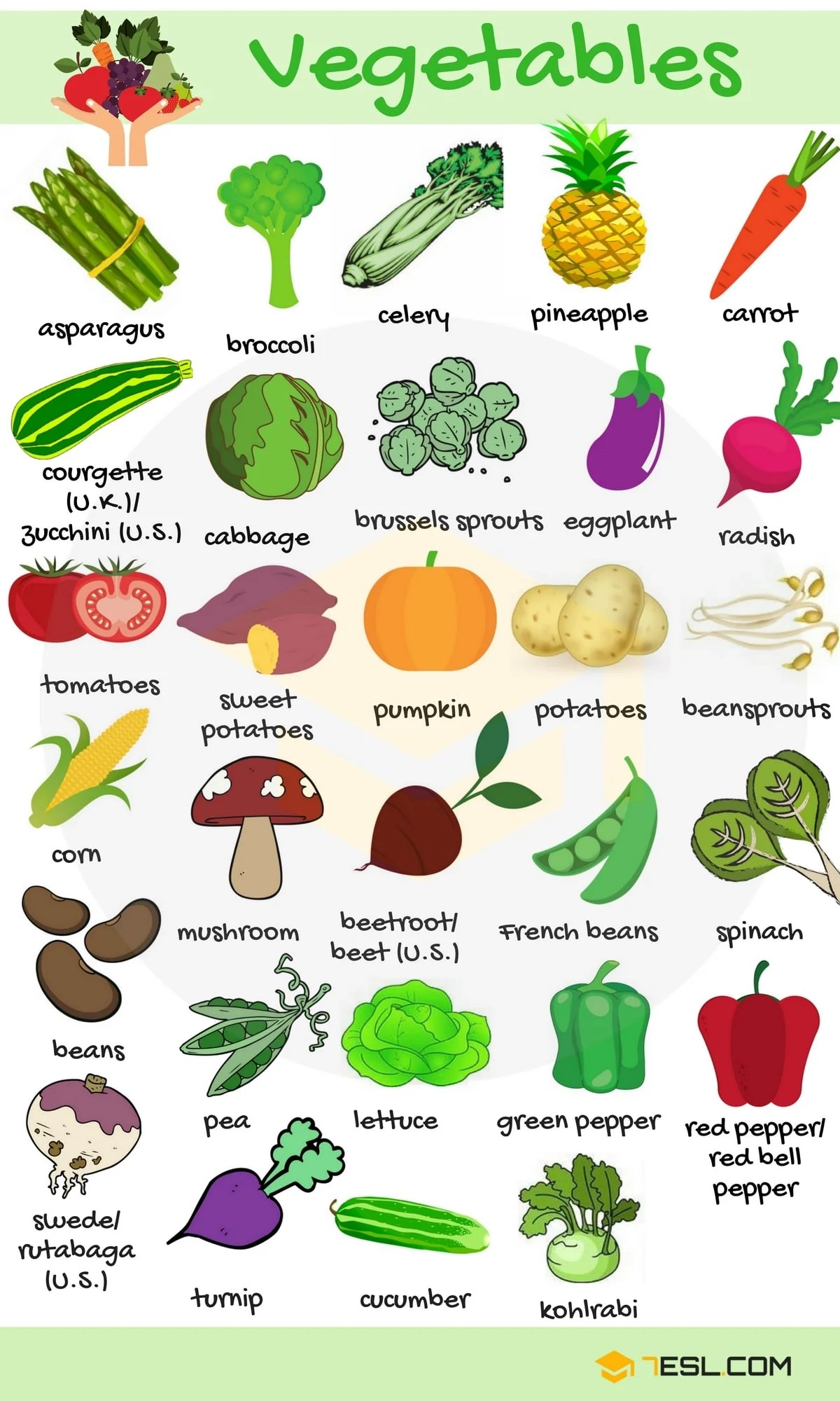 List Of Vegetables Useful Vegetables Names In English