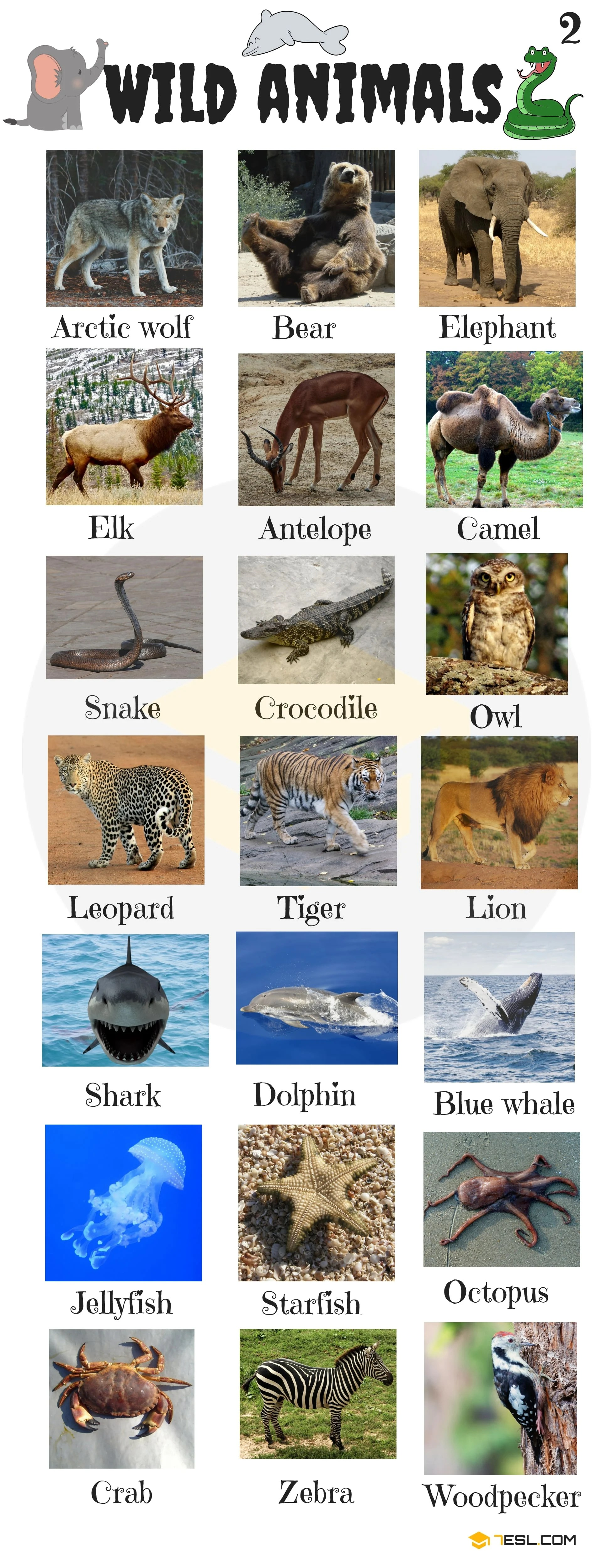 Animals Vocabulary In English Learn Animal Names