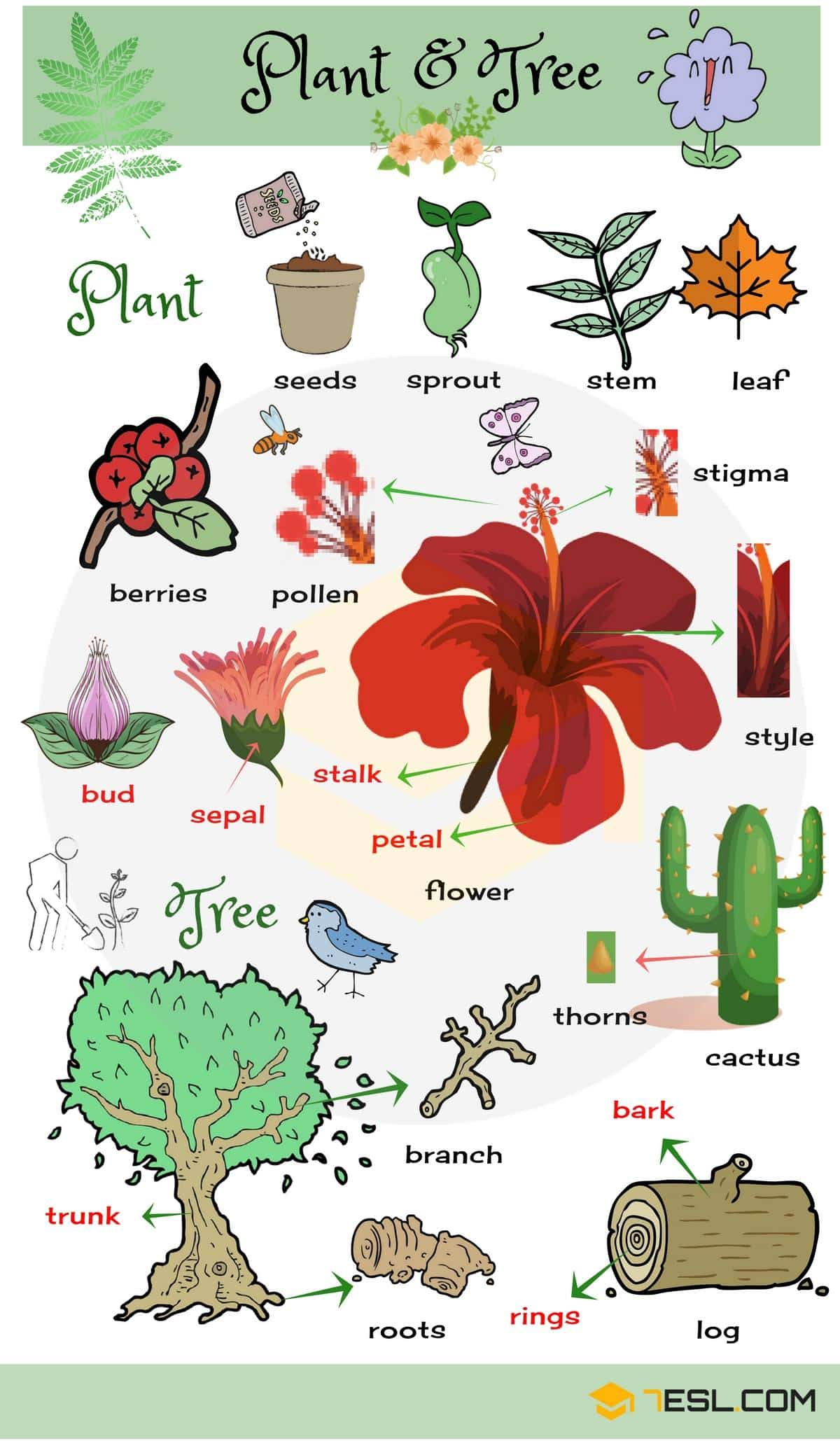 Plants And Trees Vocabulary Plant Names In English