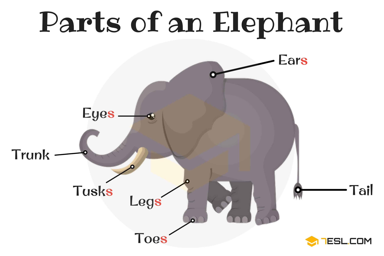 Label The Elephant Worksheet
