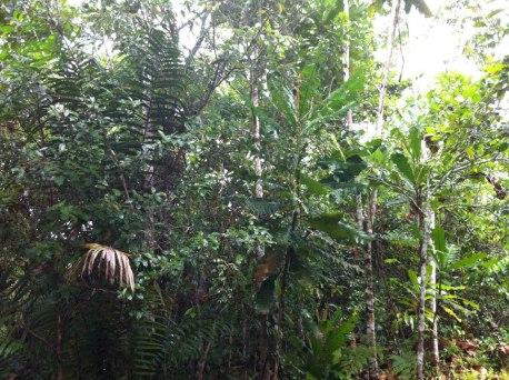 草木屋外的叢林