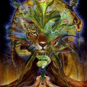 西方美洲豹