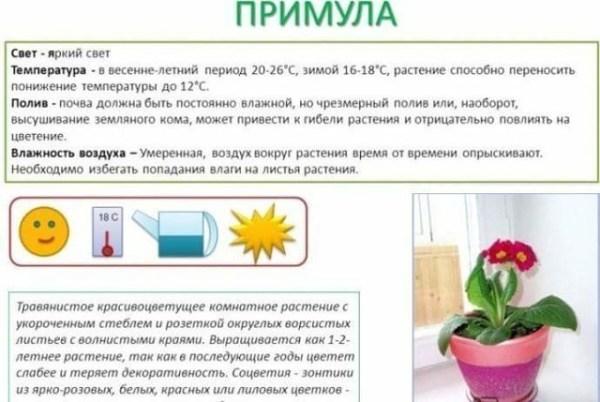 Паспорт комнатных растений в картинках