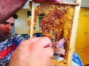 Removing honey and wax comb to be crushed.