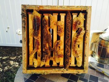 8 frames full of honey.