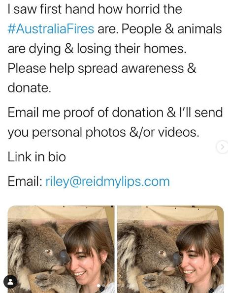 Порноактриса пообещала откровенные фото спасающим коал от пожаров в Австралии