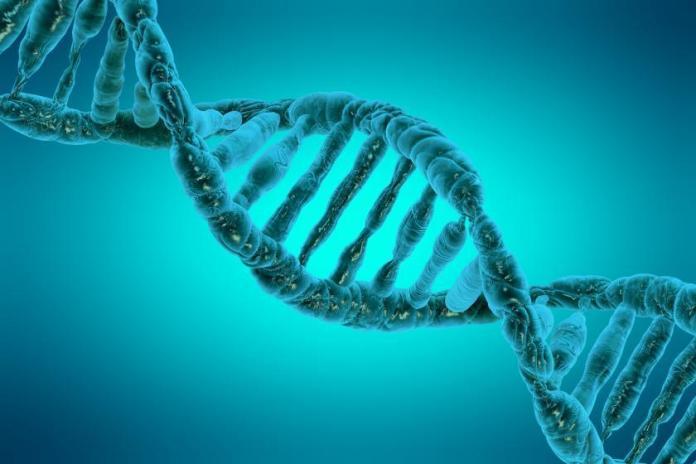 Ученые доказали, что ДНК является носителем наследственной информации