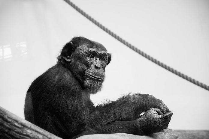 В условиях пандемии животные в зоопарках приобретают привычки людей
