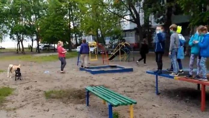 Собачницы загнали детей на теннисный стол в Брянске