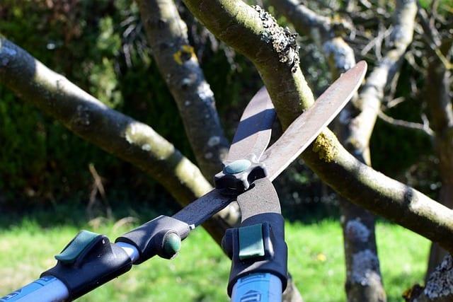 Житель Ленобласти зарезал бывшую жену ножницами