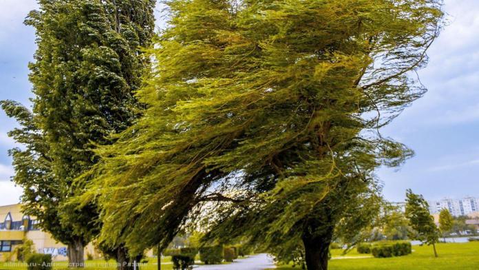 Порывистый ветер и дождь ожидаются в Смоленской области 21 мая