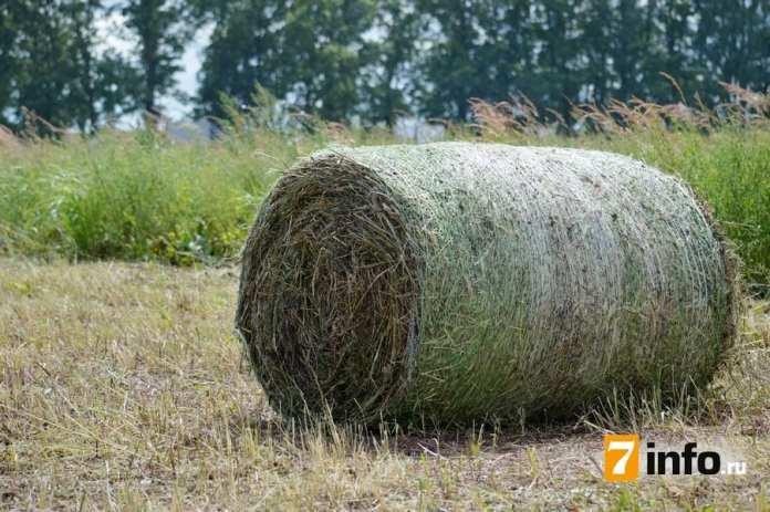 День поля в Рязанской области: От первого снопа до техники нового поколения