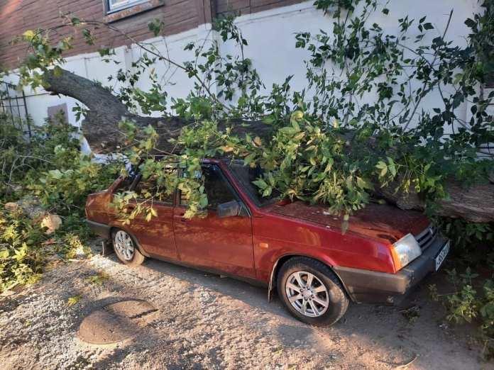 В центре Рязани дерево упало на машину