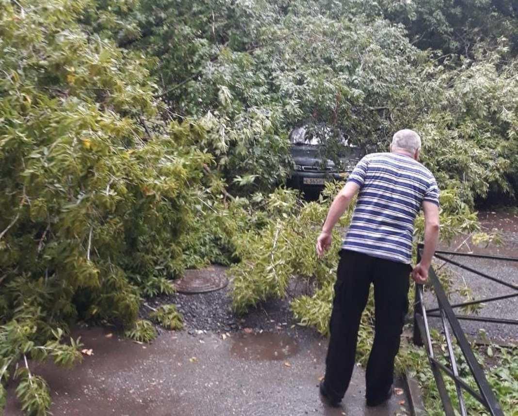 В Рязани деревья упали на три машины