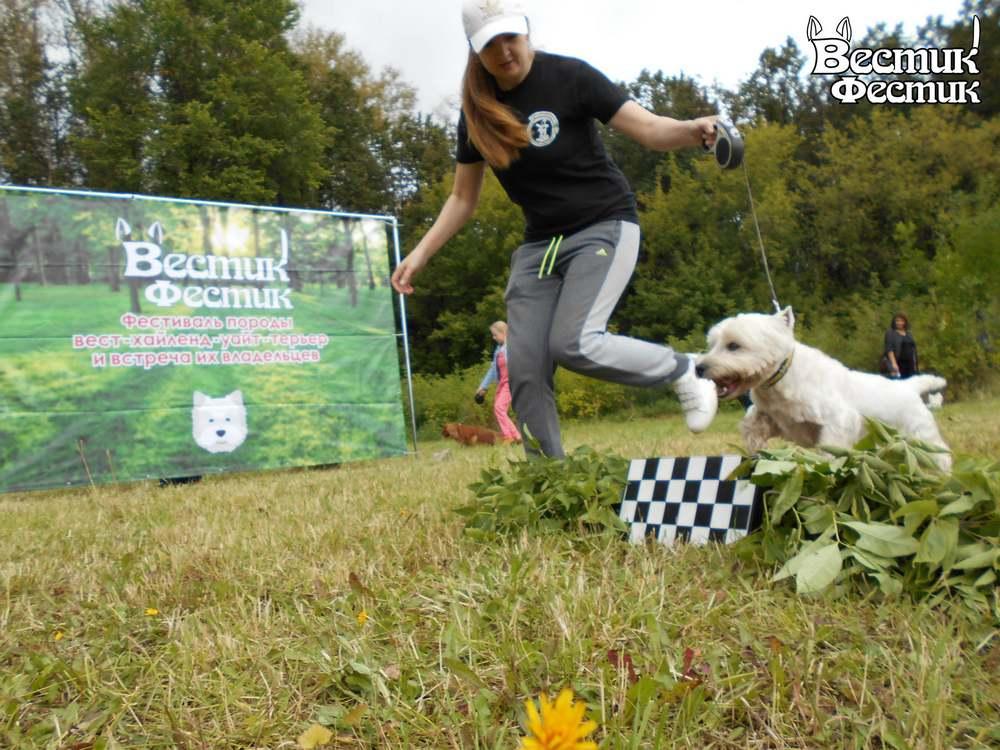 В Рязани прошёл монопородный фестиваль собак «Вестик-Фестик-2020»