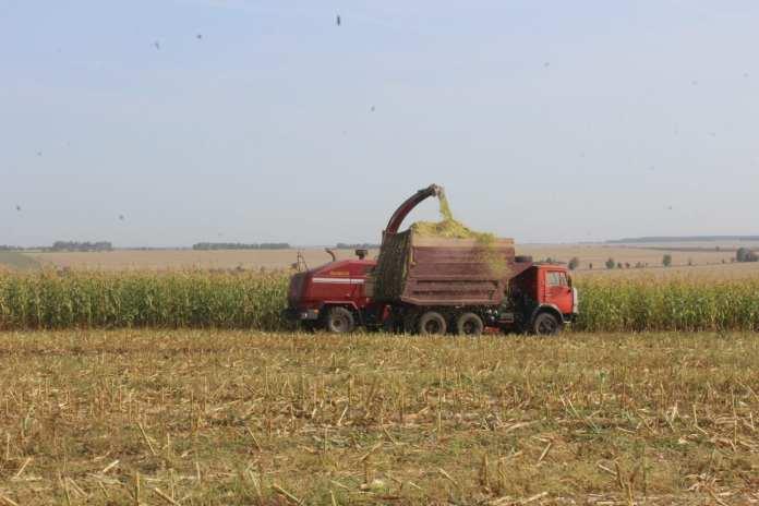 В Скопинском районе намолотили 11 000 тонн кукурузы
