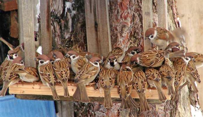 Рязанцам предлагают принять участие в Евразийском учёте птиц