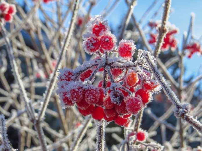 Ночью в Рязанской области местами похолодает до -13 градусов