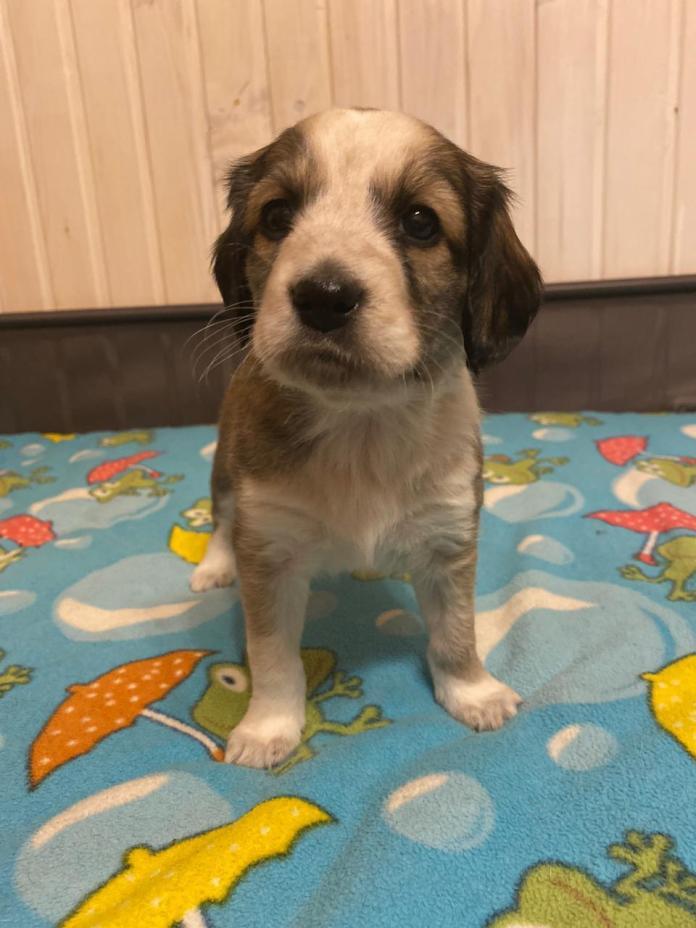 В Рязани ищут хозяев для щенков собаки, брошенной на дороге