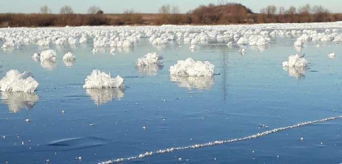 В Касимовском районе сфотографировали «ледяные цветы»