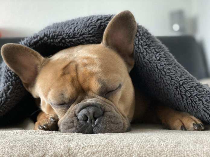 В Череповце владельцам собак бесплатно раздадут биоразлагаемые дог-пакеты